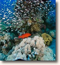 A beautiful Coral Reef off of Okinawa, Japan.