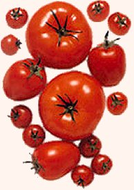 Lycopene is a proven antioxidant that may lower the risk of certain diseases including cancer and heart disease.
